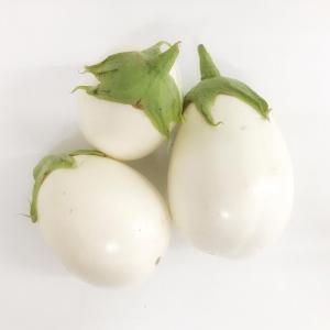 Melanzana bianca biologica